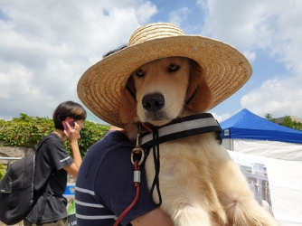 dog-with-hat